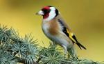 Bird-on-the-pine-tree_1920x1200